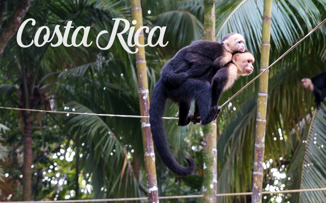 Sun, Waves & Monkeys in Costa Rica