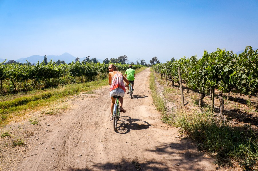 Bike & Wine Tour