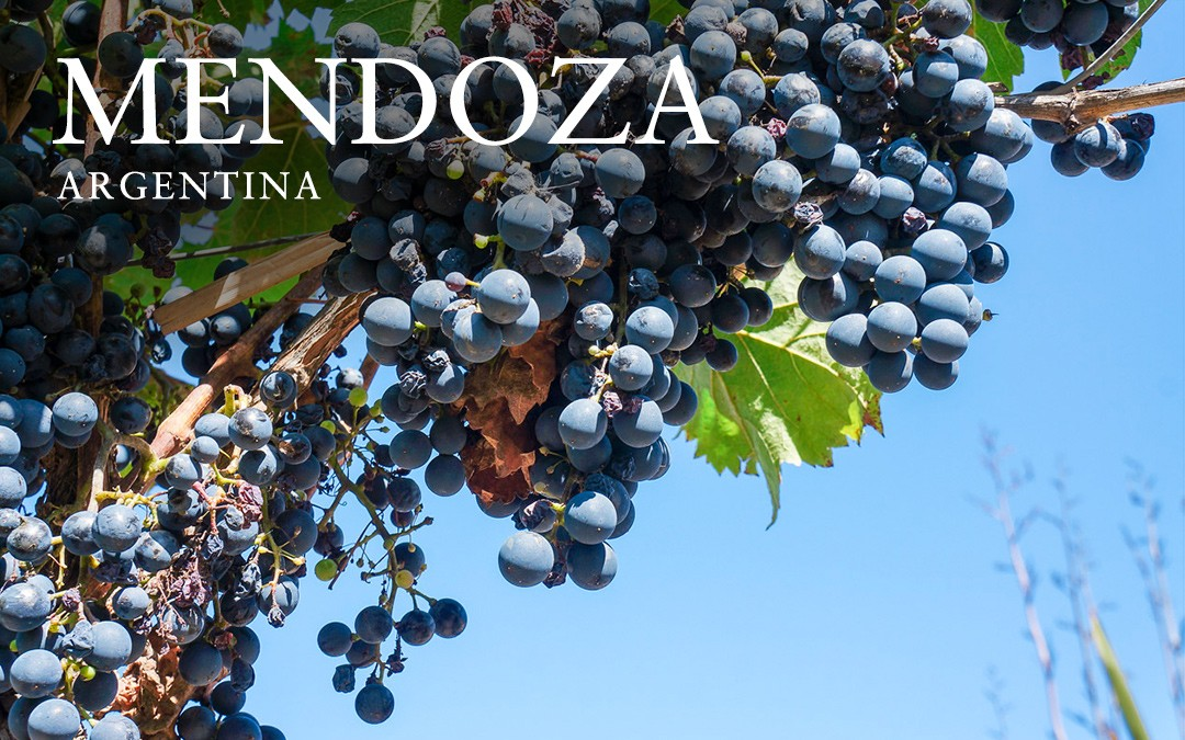 Wine Tasting in Mendoza, Argentina – The Untold Guide