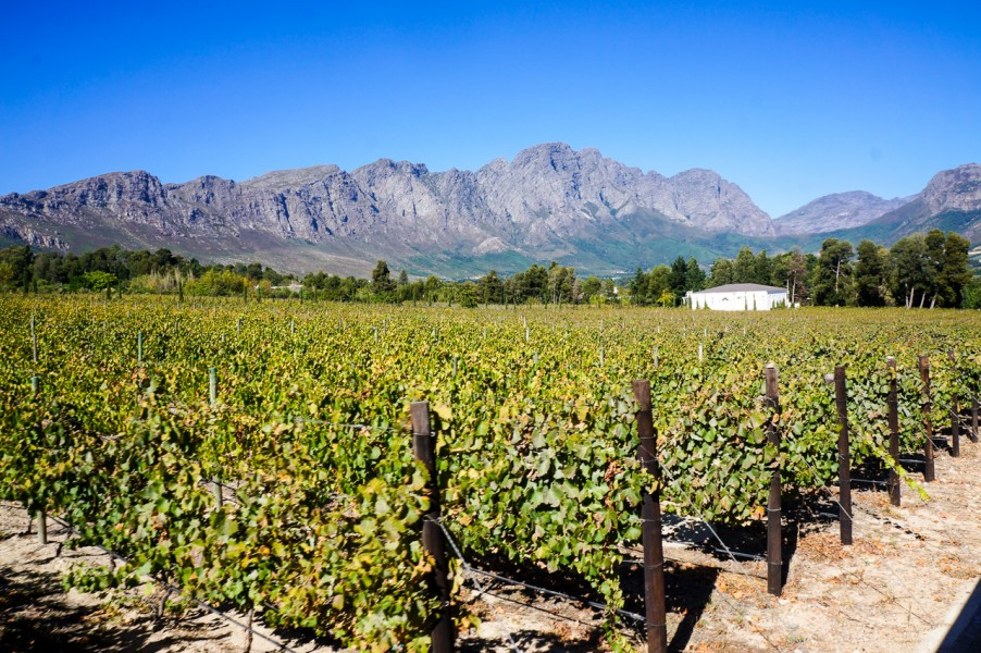 Franschhoek Wine Regions