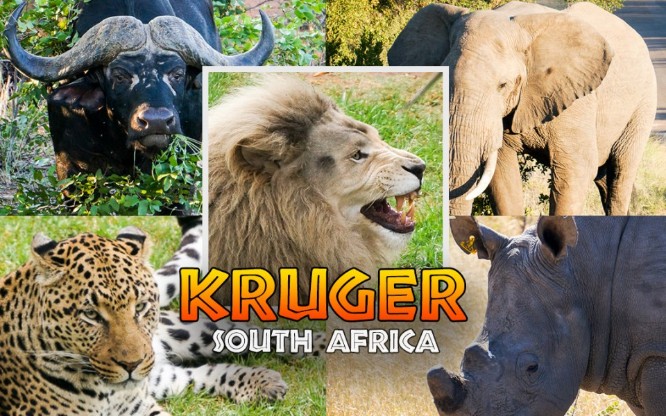 Guide To Game Driving In Kruger National Park South