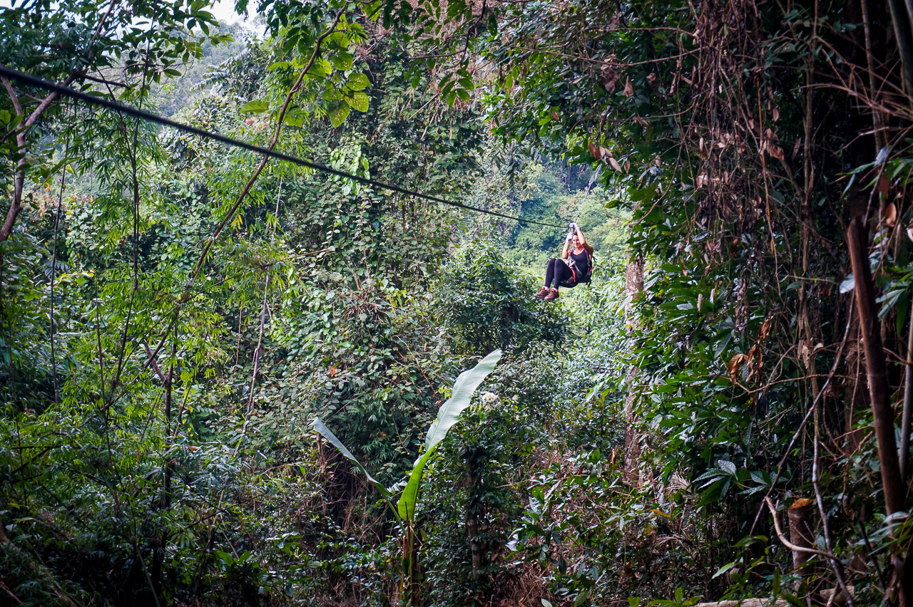 gibbon experience review tips u0026 advice just globetrotting