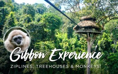 Jungle Treehouses & Zip-Lining with Monkeys aka The Gibbon Experience