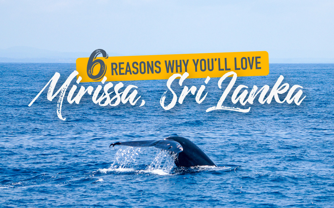 6 Reasons Why You'll Love Mirissa, Sri Lanka