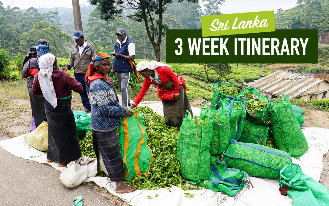 Sri Lanka 2-3 Week Itinerary: Beaches, Hills & Culture