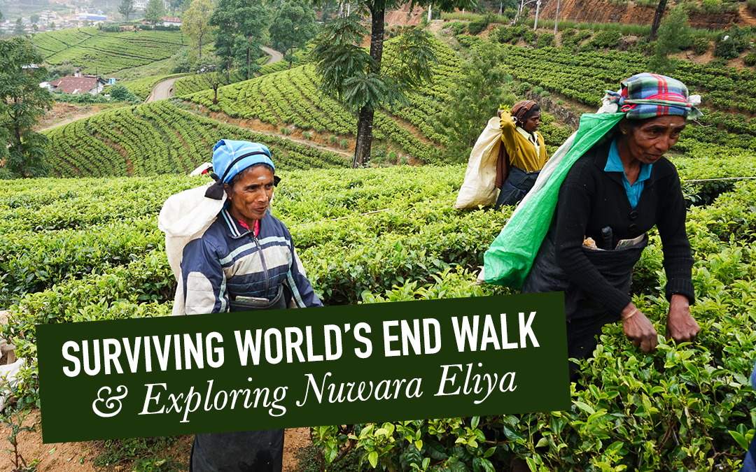 Surviving World's End Walk and Exploring Nuwara Eliya, Sri Lanka