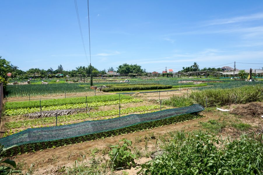Tra Que Vegetable Village