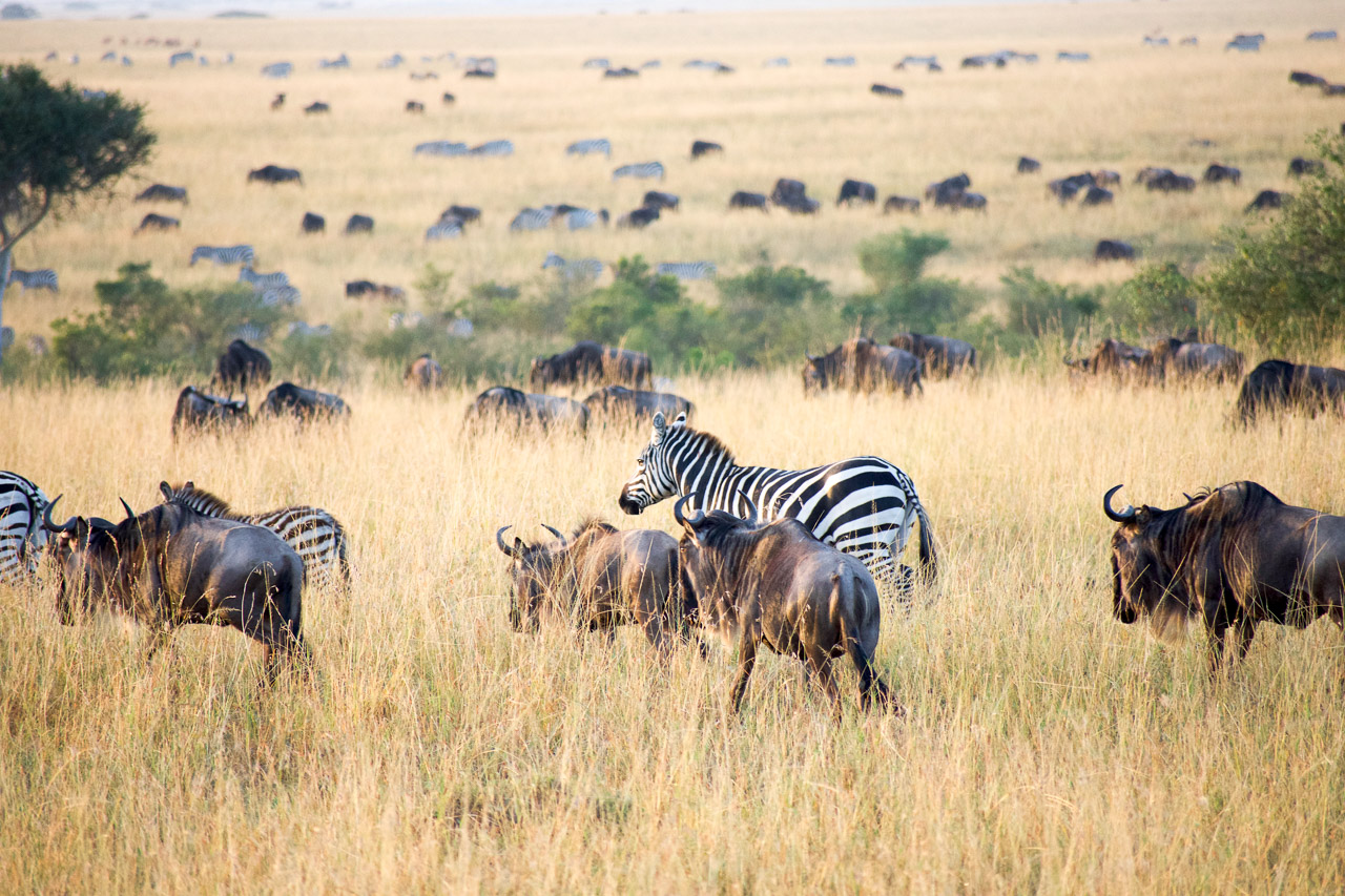an examination of the safari in kenya On sunday, september 23, cnn will air the kenya-themed installment of parts unknown the season 12 premiere is the last episode that anthony bourdain completed before he died in a new trailer for.