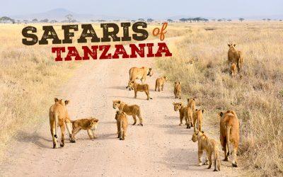Safaris in a Crater!?! Discover Ngorongoro & Serengeti, Tanzania