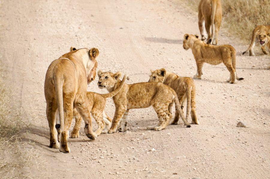 The Serengeti National Park