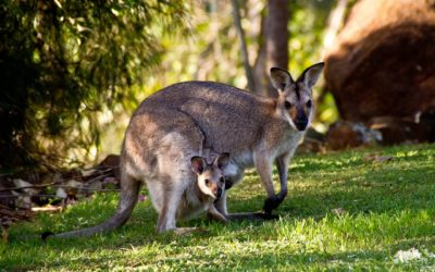 Your Guide to Australian Wildlife and National Parks
